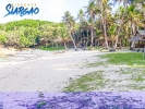 6 hectares White Sand Beach Front Burgos Siargao for Sale